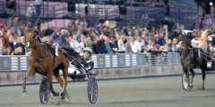 2017 EUROPEAN CHAMPIONSHIP FOR MARES