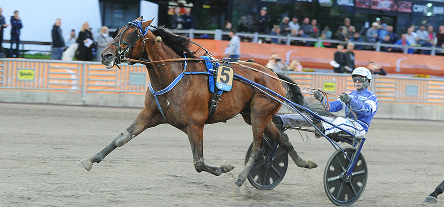 EUROPEAN CHAMPIONSHIP FOR MARES
